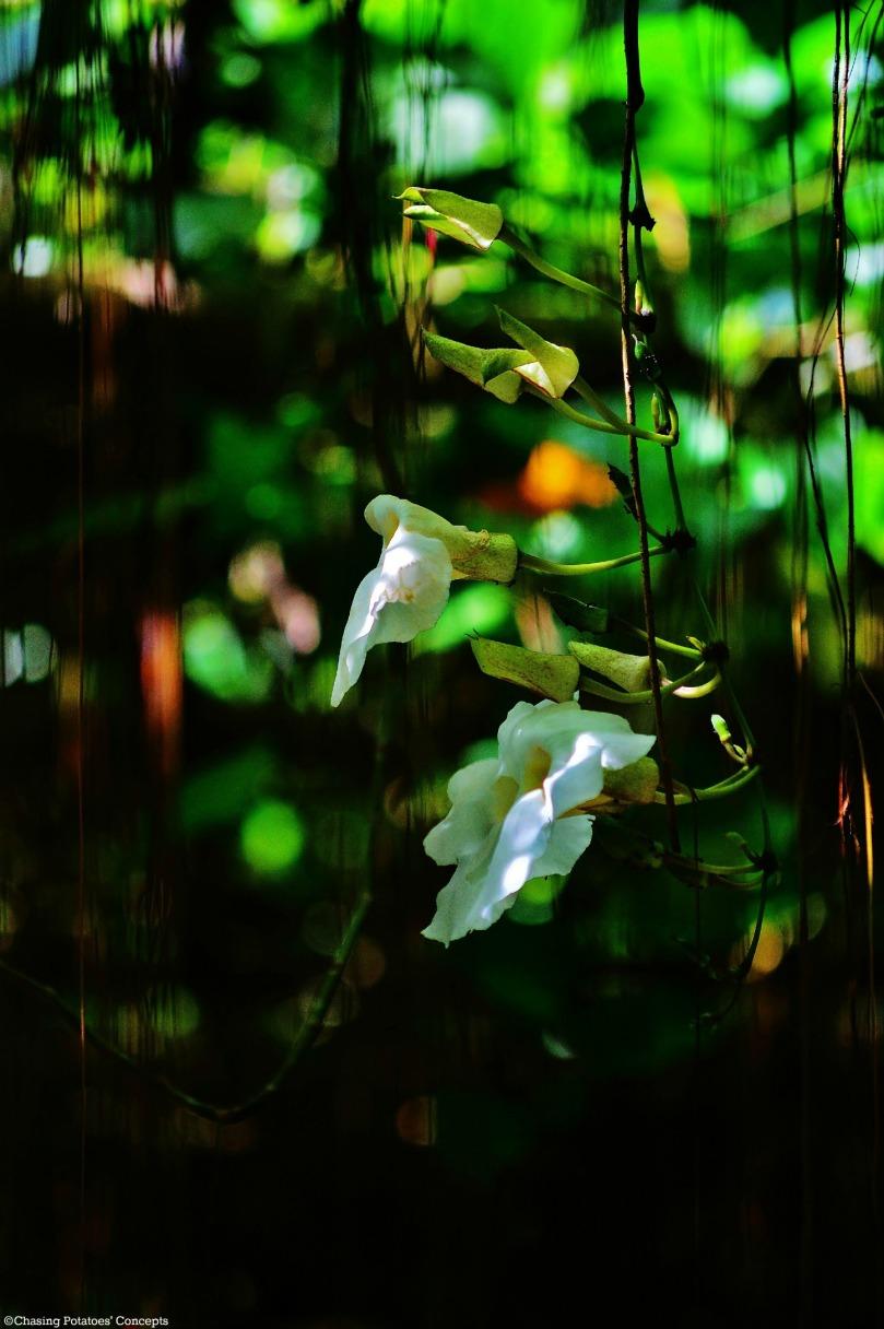 Beautiful Flowers in Mantayupan Falls