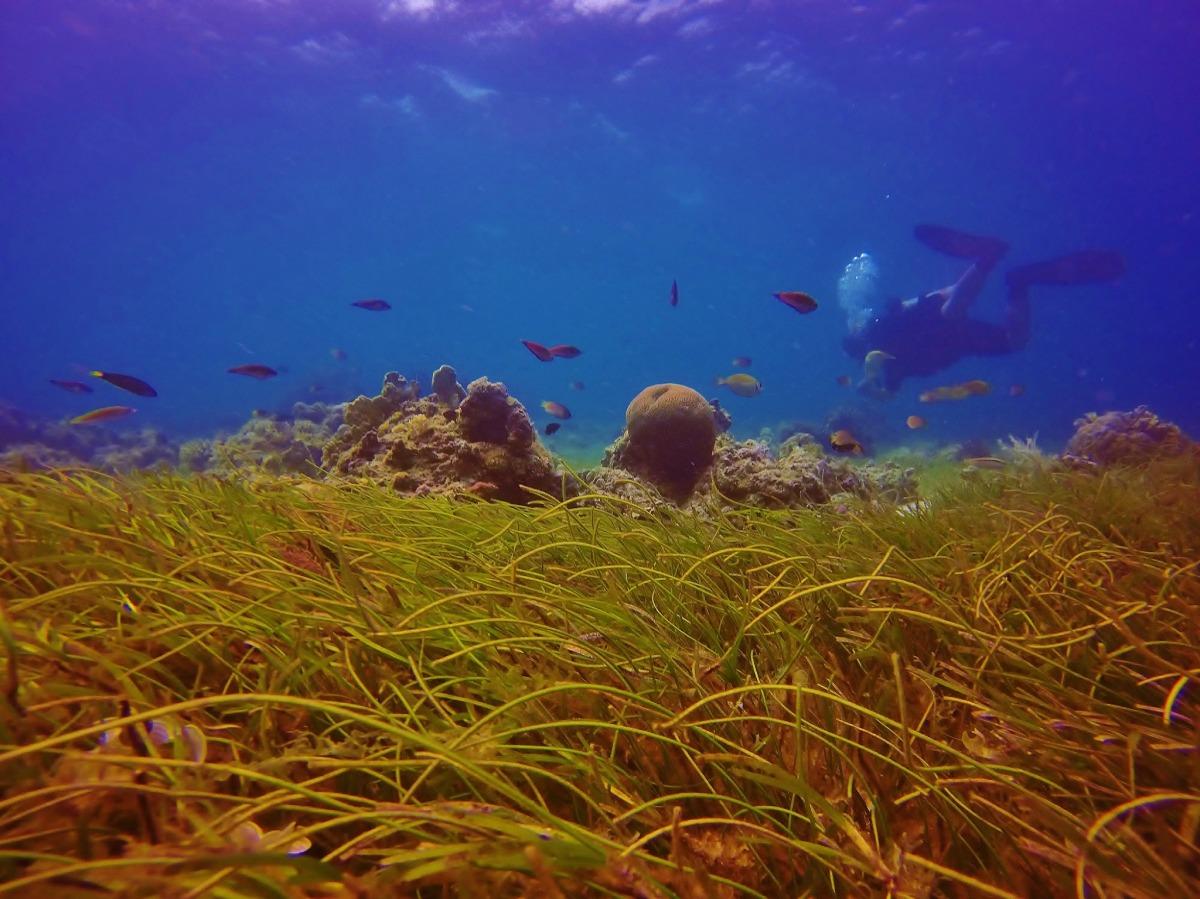 Fun Dive, Drift Dive and Night Dive inMactan