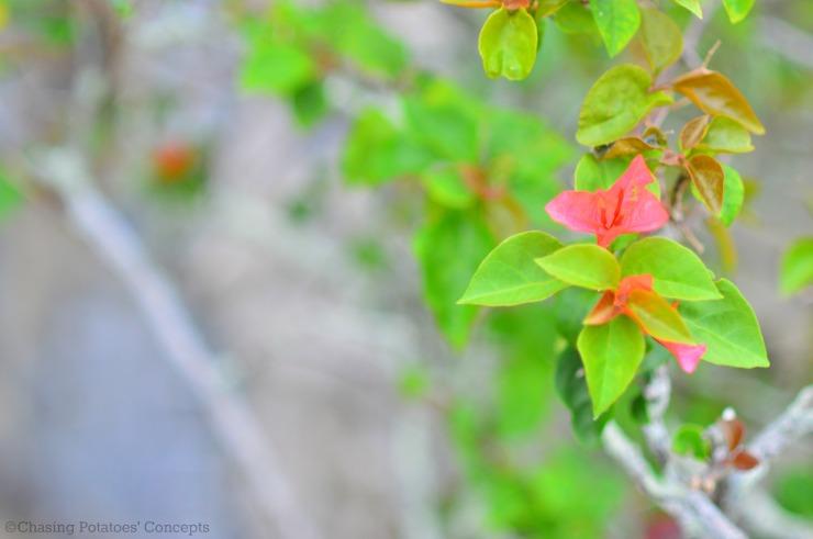 flowers - Copy