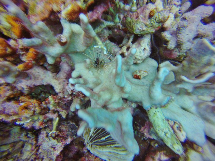 Hale Manna - Lionfish