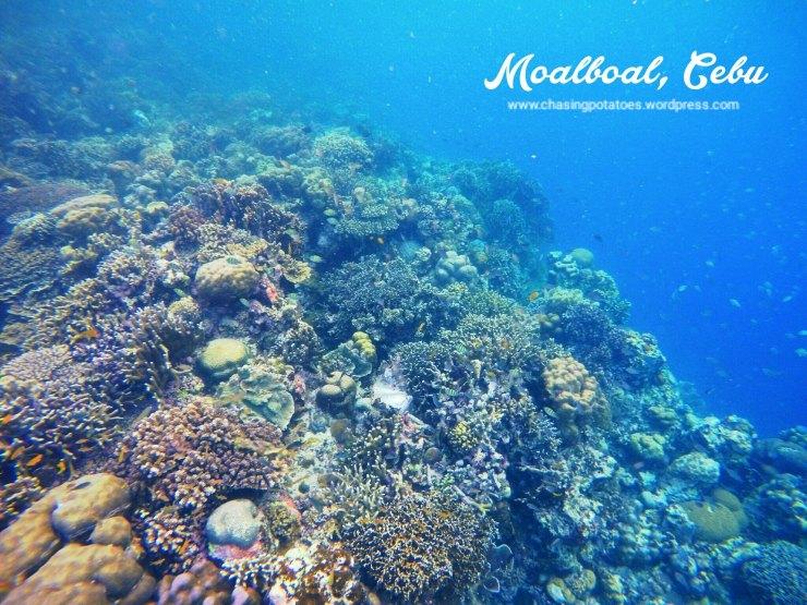 Moalboal 4
