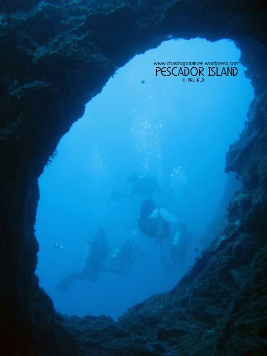 The Three Sites in Moalboal : Haven for Divers and Non Divers Alike