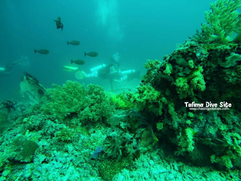 Talima and Tambuli Dive Sites