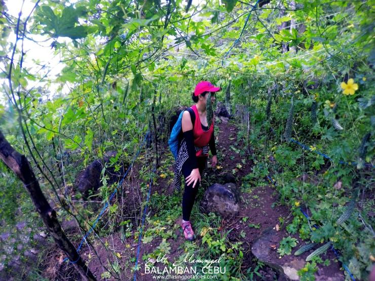 Climbing Mt. Manunggal and Mt. Mauyog